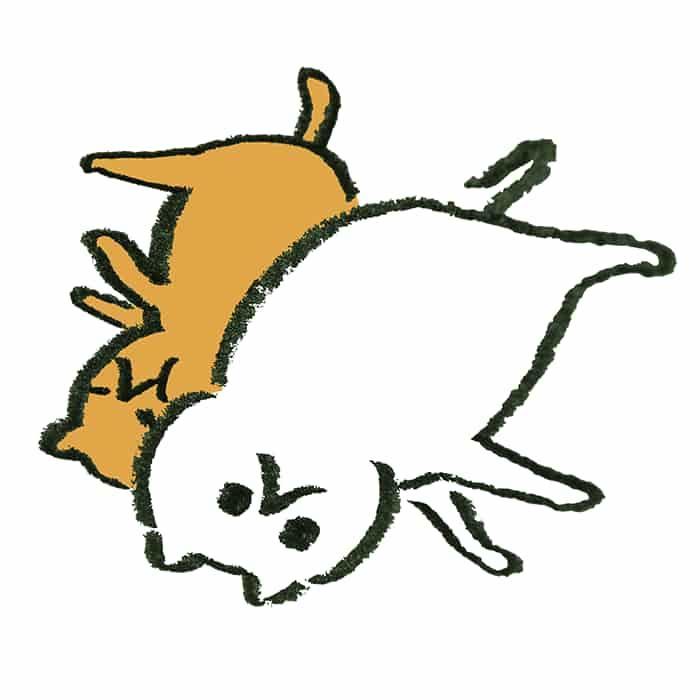 寝返りをうったら一緒に寝ている猫を押しつぶした形になった猫