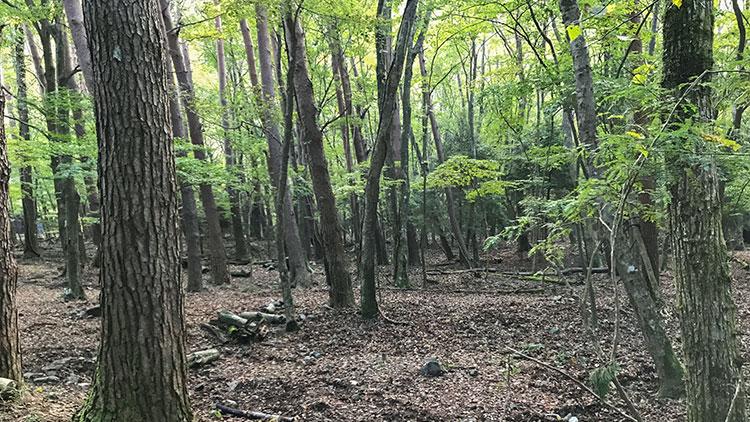 浩庵キャンプ場林間サイトの全容