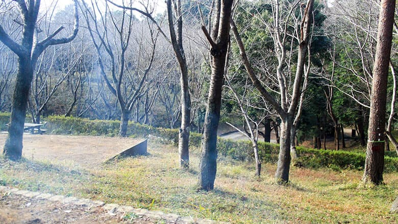 Recamp (リキャンプ)しょうなんの桜の森キャンプサイトから見える景色
